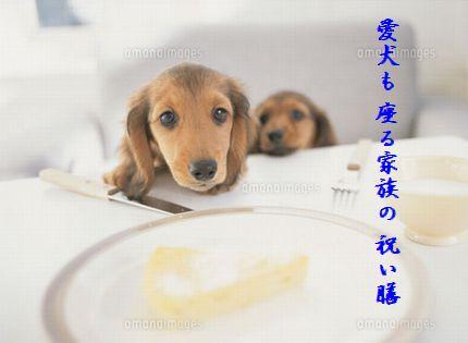 イヌ食卓愛犬も
