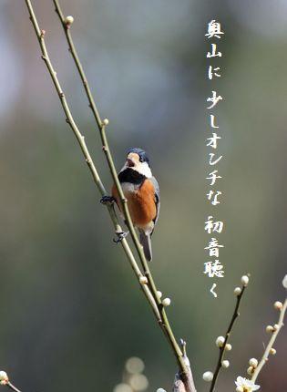 はるの鳥(ヤマガラ奥山に