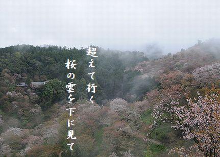 さくら(吉野山)2越えて行く