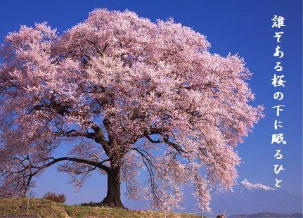 さくら(一本桜)誰ぞある