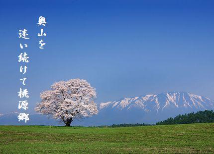さくら(一本桜小岩井農場)奥山を