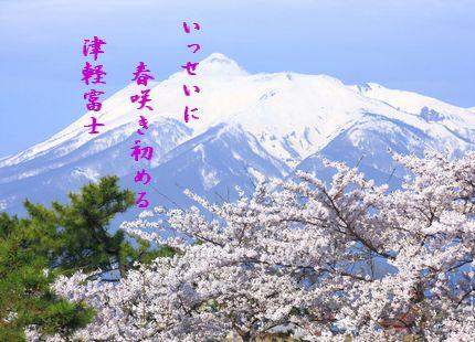 あおもり津軽富士桜いっせいに