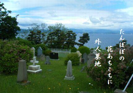 ひょうご神戸外人墓地3たんぽぽ