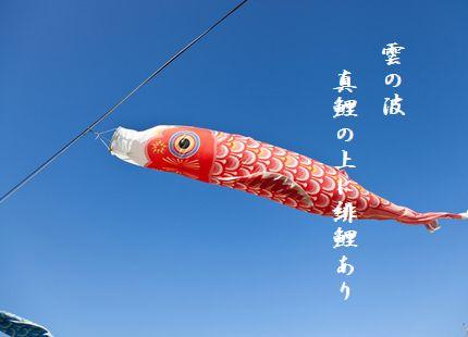 こいのぼり緋鯉