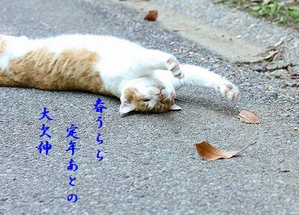 のびをする猫春うらら