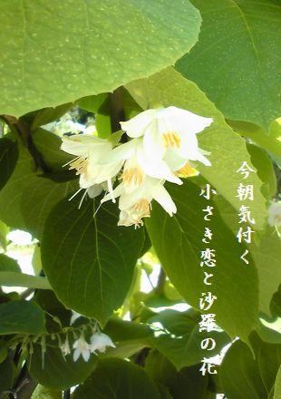 さら双樹の花今朝