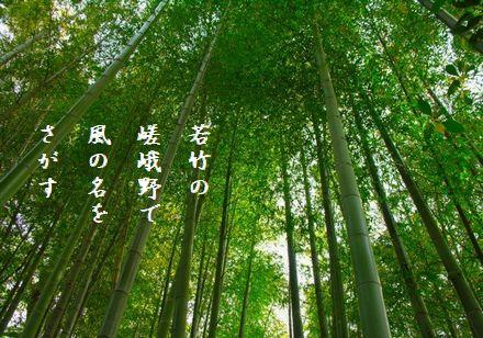 きょうと竹林3風の名