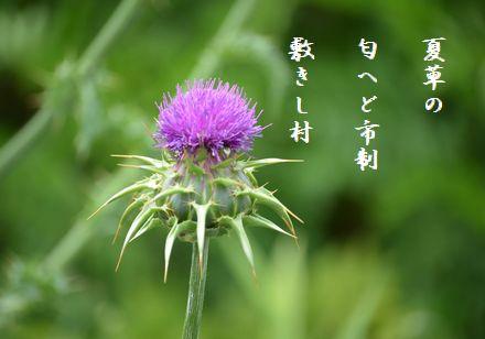 アザミ夏草の