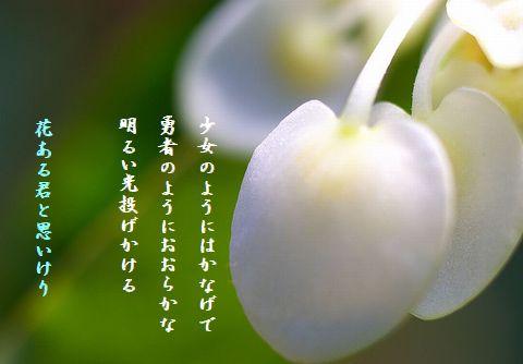 しろむく(3月の花)