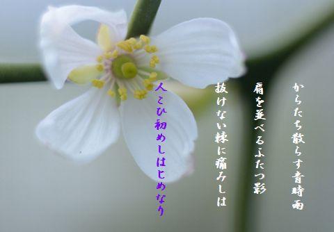 20130925123937f5e.jpg