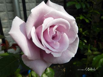 baraab_20130510153843.jpg