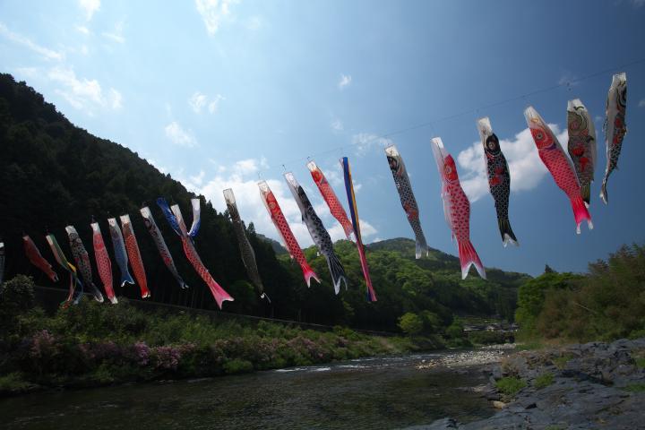 錦川のこいのぼり1
