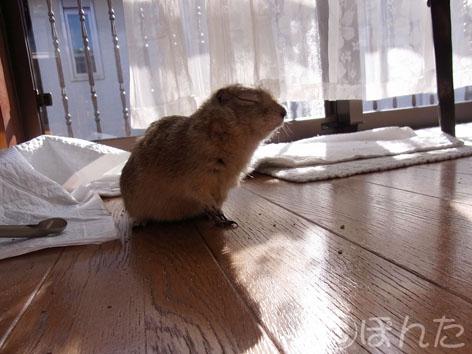 2013正月_ぴきぴき10
