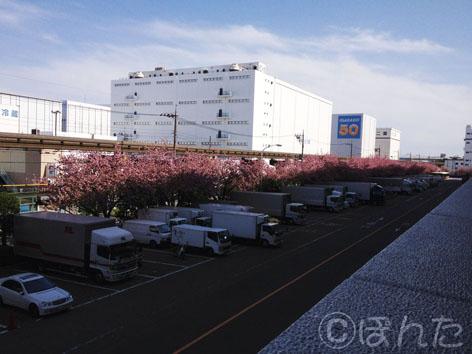 倉庫_桜5