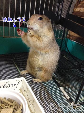 れんげ_徒然2
