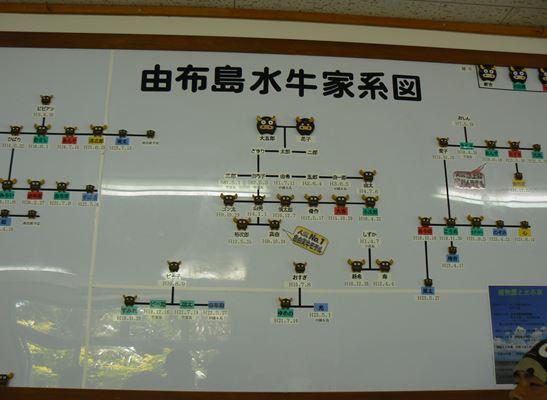 水牛家系図25