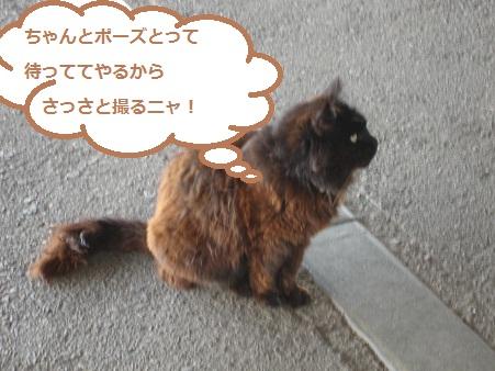 IMG_0512_20120606215557.jpg