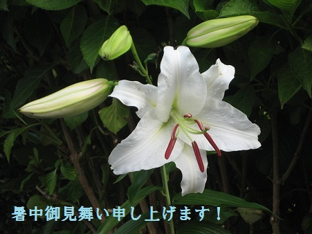 IMG_1257_20120801210639.jpg