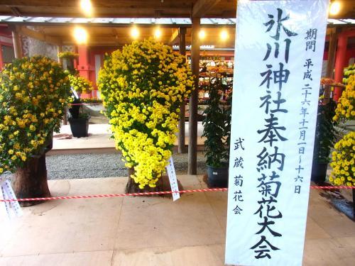 141112-202菊花大会(S)