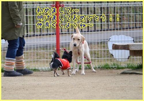 近鉄花園4119