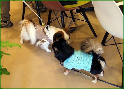 DogCafe Pu01514
