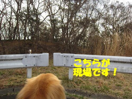 IMG_8159.jpg