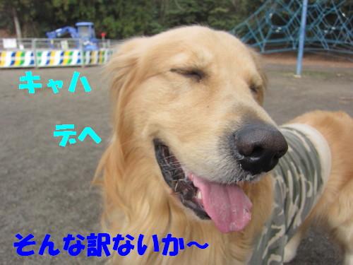IMG_8176.jpg