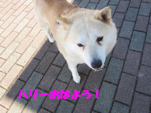 IMG_8346.jpg
