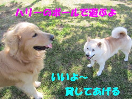 IMG_8347.jpg