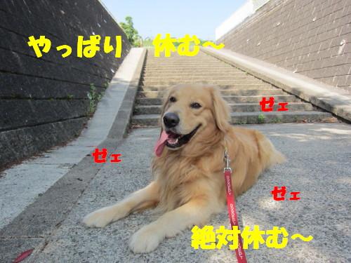 IMG_8422.jpg