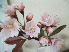桜20130520