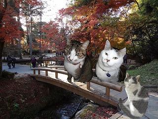 猫3匹と紅葉曾木公園