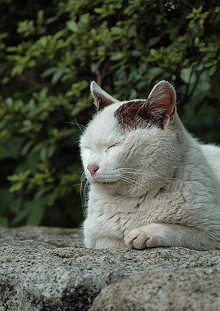 猫である4