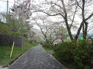 鏡村桜まつり-2