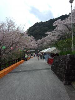 鏡村桜まつり-3