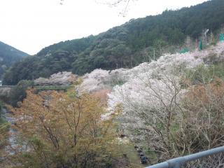 5鏡村桜まつり-