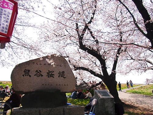熊谷桜堤 (3)
