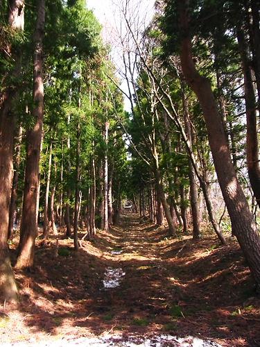 土津神社奥の院参道