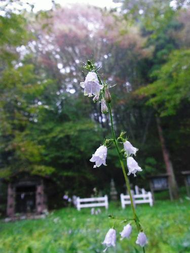 海野の墓の花
