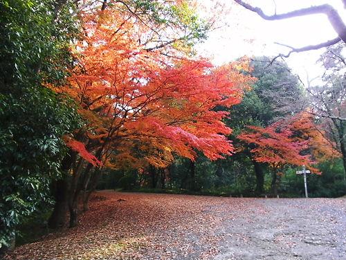 伊賀上野紅葉