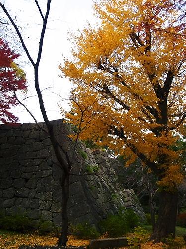 津城天守台と銀杏