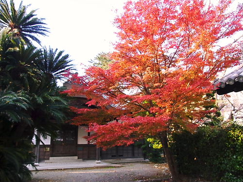 松阪城内紅葉