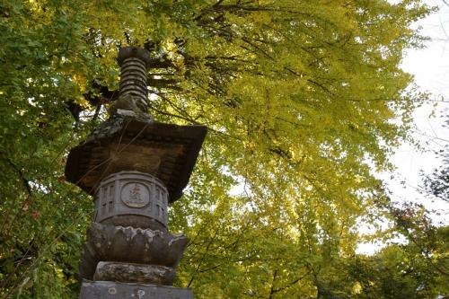 6大銀杏 (1200x800)