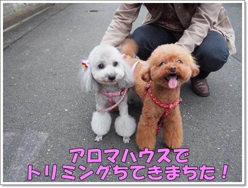 20141106_010.jpg