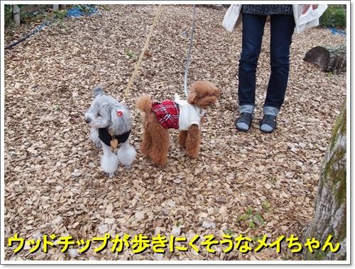 20141109_258.jpg