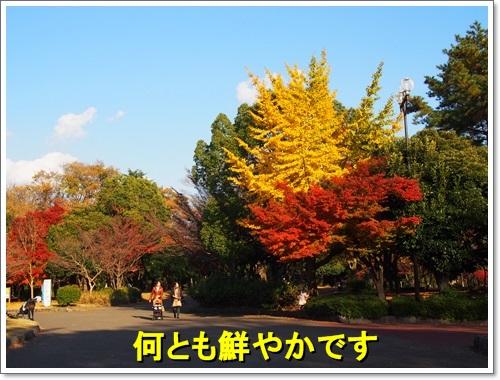 20141123_056.jpg