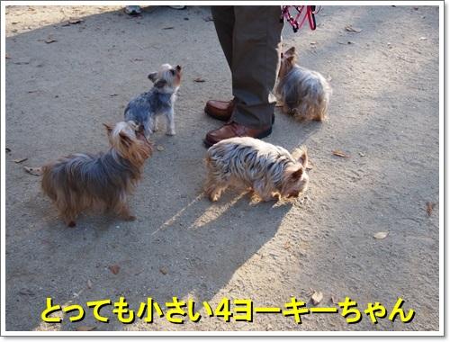 20141123_107.jpg