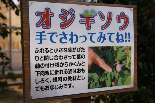 瀬波南国フルーツ園