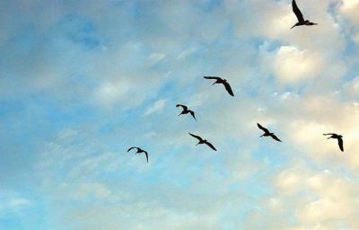 鳥 空 雲 帰る