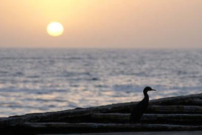 夕日 浜辺 鳥 一羽